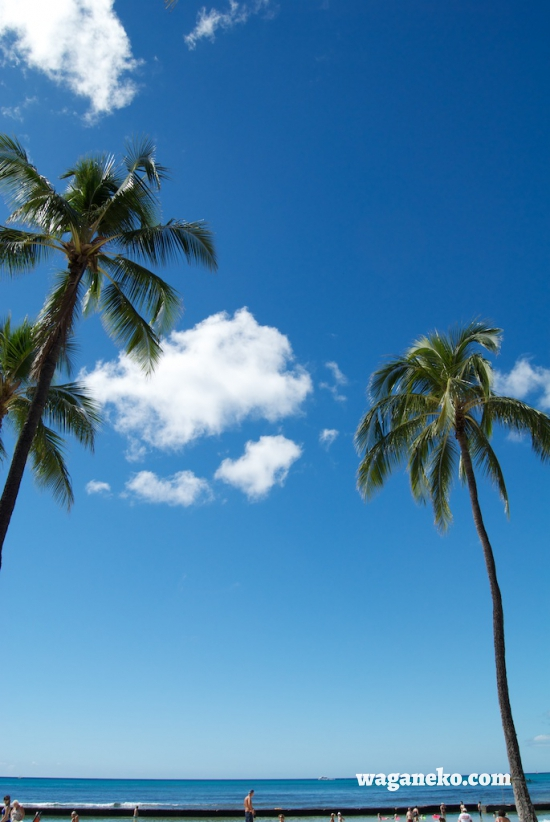 Blue Sky and Coconuts